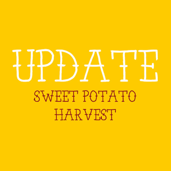 A Sweet Potato Update