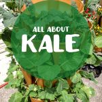 all-about-kale