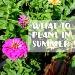 what-to-plant-in-summer