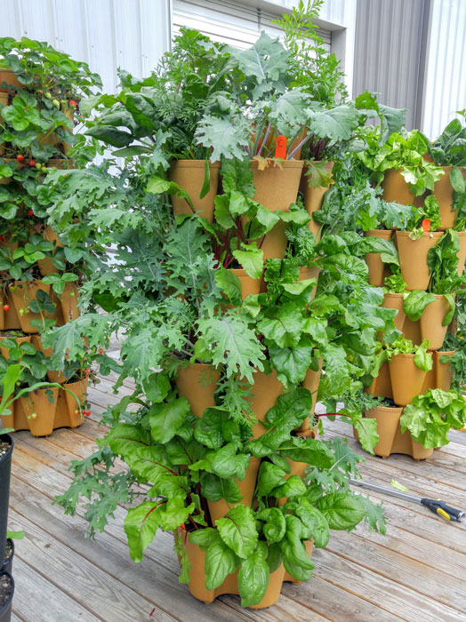 GreenStalk vertical planter