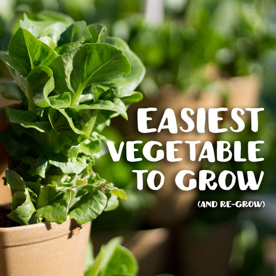 The Easiest Vegetable To Grow | Anyone Can Grow This!   GreenStalk Vertical  Garden